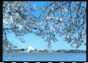 blossomdc