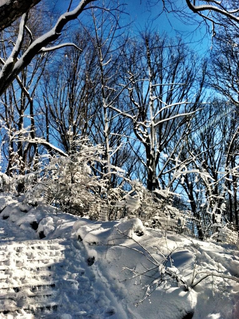 Prospect Park snow sled 5