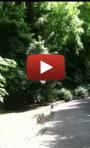 Sugar_Beach_Shuttle_Ride_video